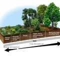 The Definitive Guide to Building Deep Rich Soils by Imitating Nature - Permaculture Apprentice