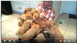 Cute Puppy Swarms Mashup - YouTube