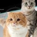 說好的貓臉辨識餵食器?台灣團隊的群眾募資案面臨失敗,創辦人解釋低估硬體成本 | TechNews 科技新報