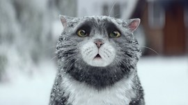 Sainsbury's OFFICIAL Christmas Advert 2015 – Mog's Christmas Calamity - YouTube