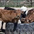 [繁] 人人嫌、人人愛:內容農場閱讀概況報告