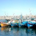Is the Recovery of Wild Fisheries the New 'J-Curve' for Impact Investors?
