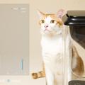 CatFi 貓臉辨識器延遲出貨,為我們上的硬體群眾募資四堂課