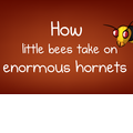 How little bees take on enormous hornets - The Oatmeal