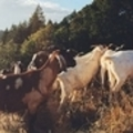 Bolinas CA, April 17: Joel Salatin - Pastoralism Prevailing