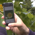 App Identifies Plants From a Picture