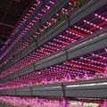 Circular Economy and True Sustainability: the Next Phase for Vertical Farming - AgFunderNews