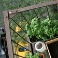 Garden DIY: Urban Gardening - Ecocentric blog