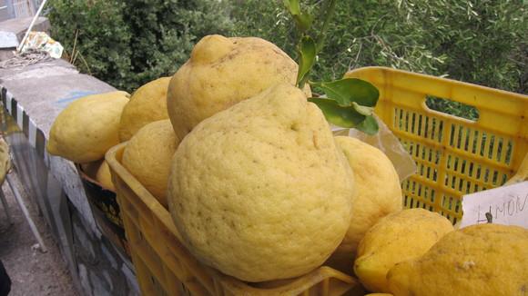 Citroenen als kinderhoofdjes; Amalfi aan tafel. - Italië met Dolcevia.com