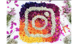 Instagram Secretly Introduced Its New Algorithm