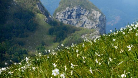 Deze foto´s van de Garfagnana in bloei mogen we jullie niet onthouden, een zee van narcissen over de berghellingen.