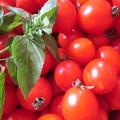 懶爆啦,有沒有這麼想吃番茄啊 — 「餵你吃番茄」機器人來了