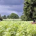 A switch to ecological farming will benefit health and environment – The Guardian
