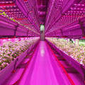 Why Chicago Is Becoming The Country's Urban Farming Capital | Fast Company