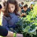 This Ultra-Sustainable Public School Will Have Its Own Urban Farm - Fast Company
