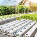 Local startup wants to bring urban farming to Dallas - Dallas Business Journal