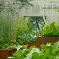 Take a Tour of the UN's Small-Scale and Diverse Food Gardens - Modern Farmer
