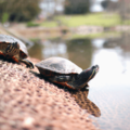 How to Boost Slow Product Adoption After Onboarding