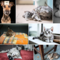 Pure CSS implementation of Google Photos / 500px image layout
